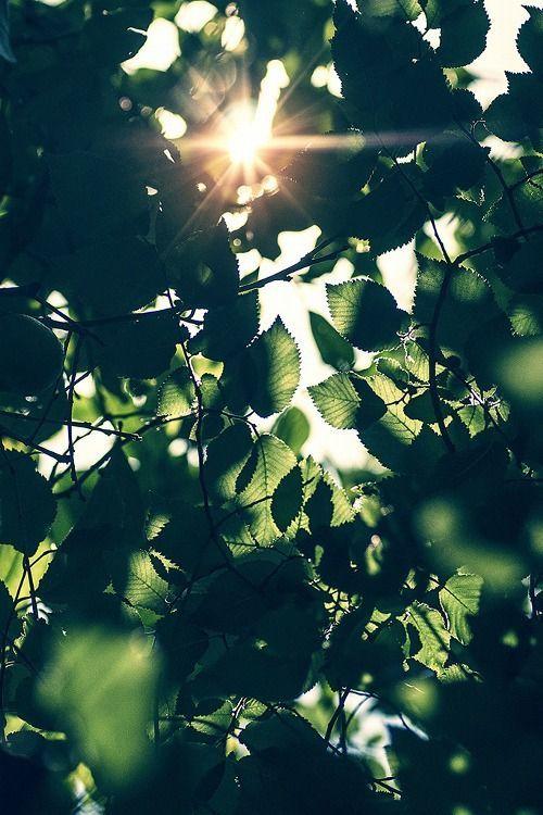 زاویه نور در عکاسی