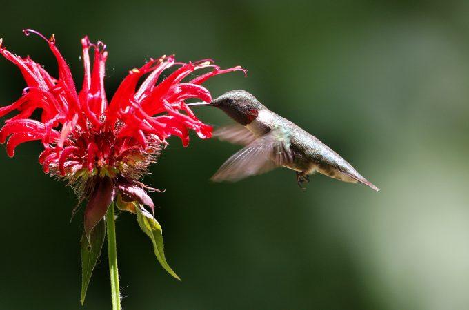 عکس زیبا پرنده با سرعت شاتر