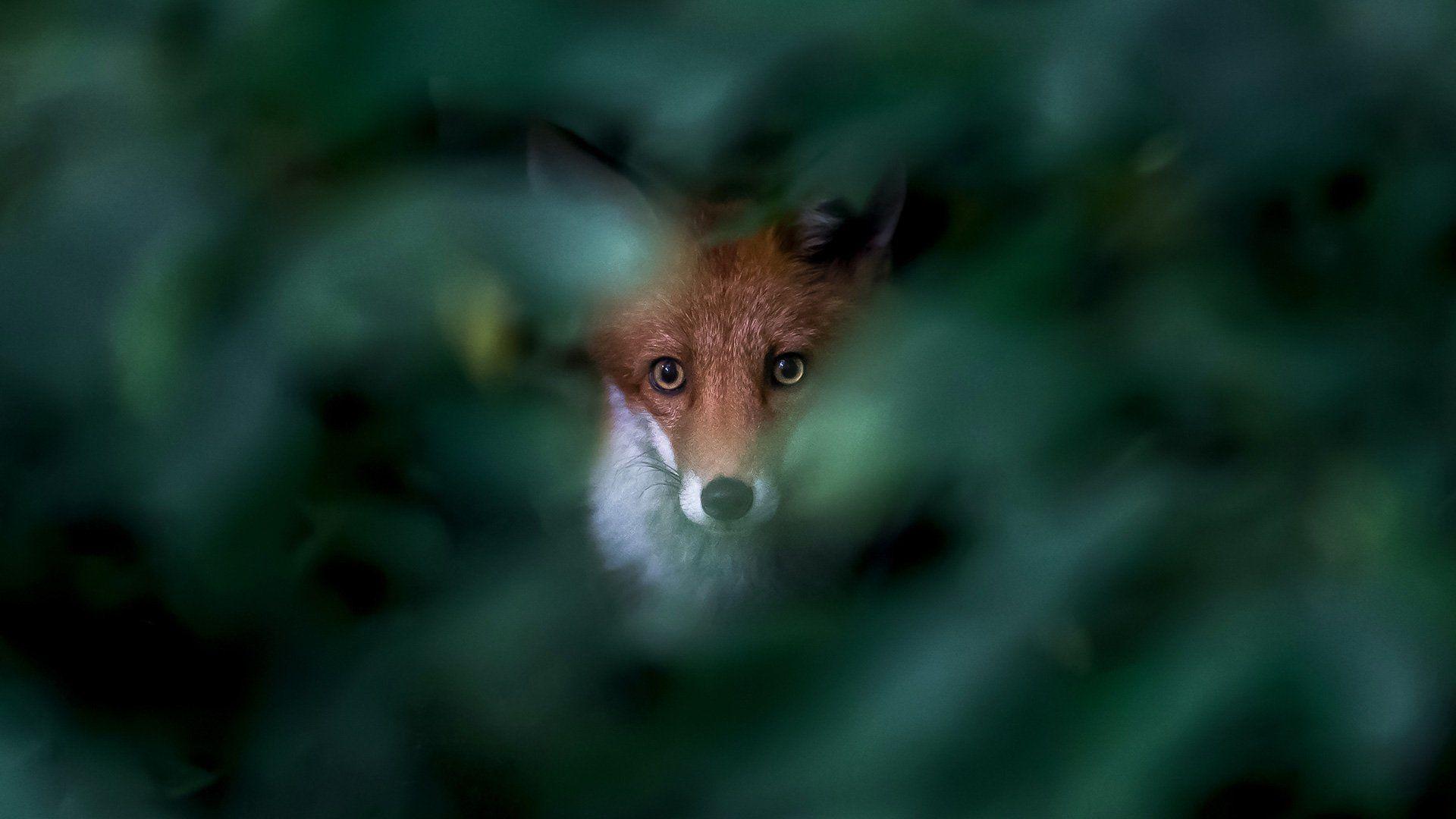 ترفند عکاسی از حیوانات