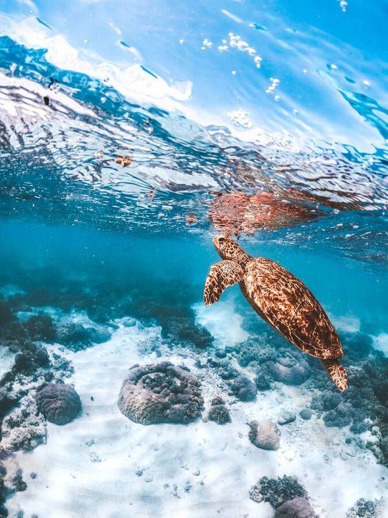 عکاسی از عمق اقیانوس