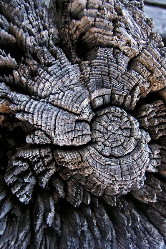 عکاسی از بافت درخت عکس از بافت های مختلف