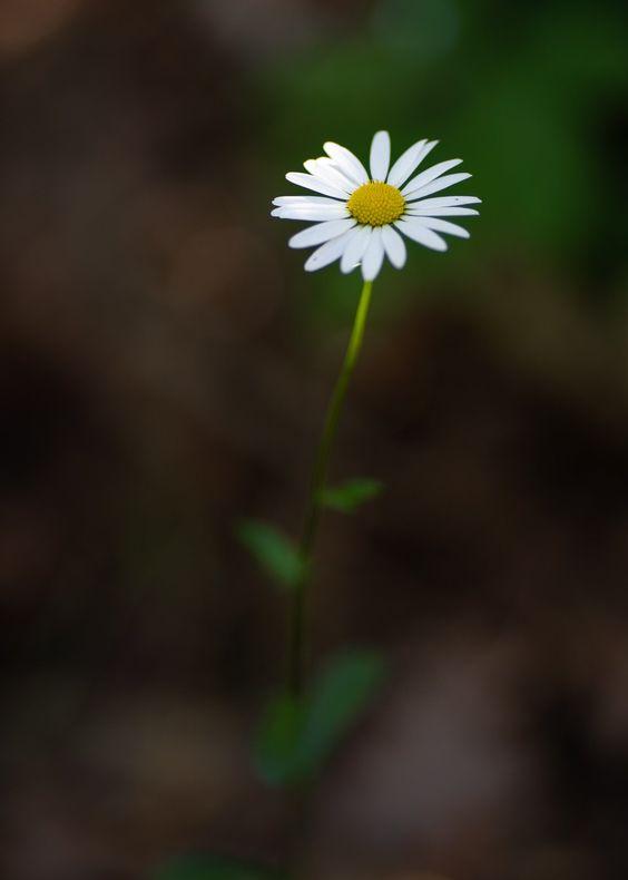 عکاسی از گل های کوچک