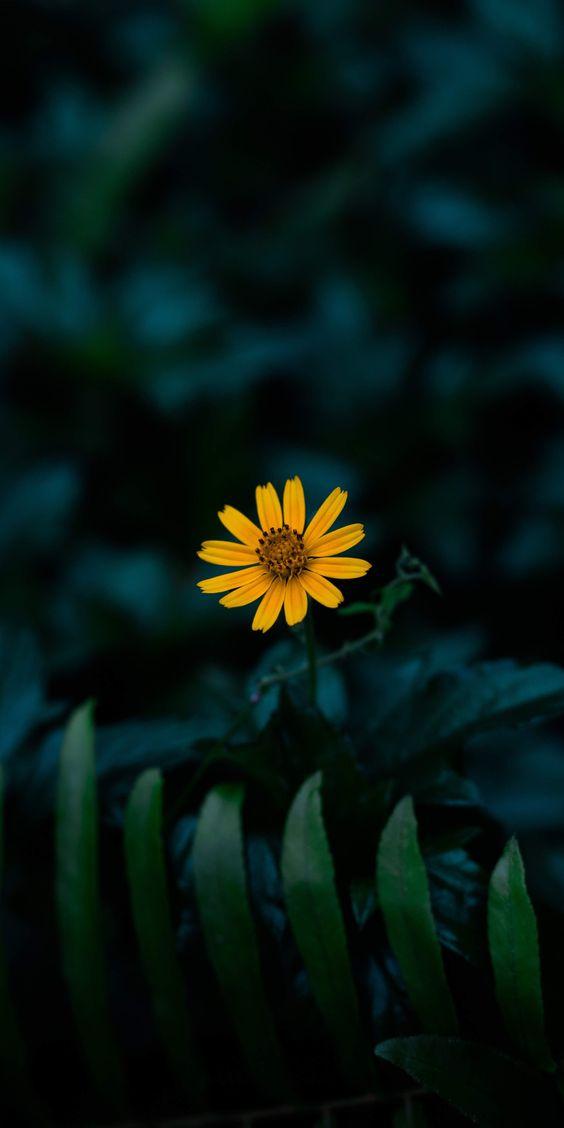 عکاسی گل گیاه