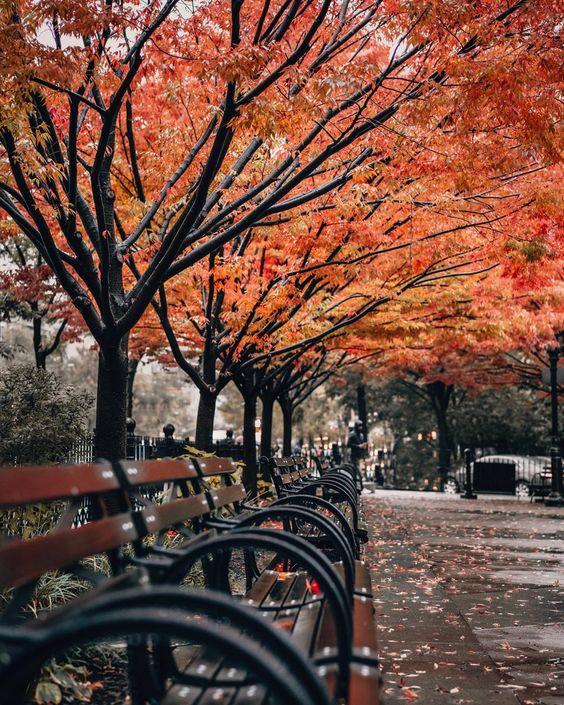 عکس از درخت های پاییزی