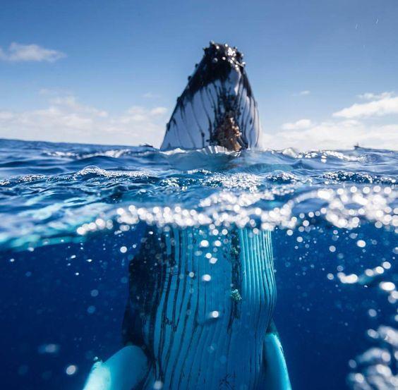عکس از موجودات دریایی