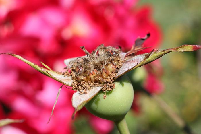 عکاسی کلوزآپ گل ها